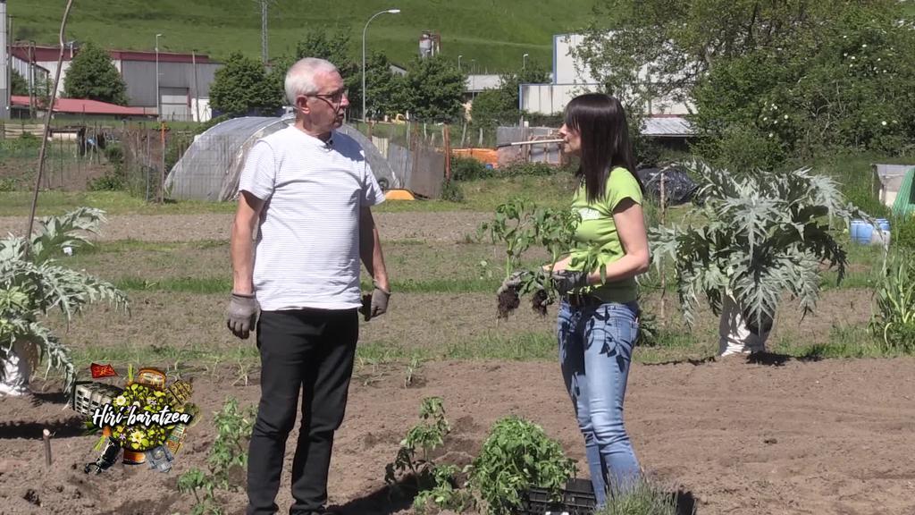 Hiri baratzea: Tomateak, zerbak eta Ilargiaren eragina