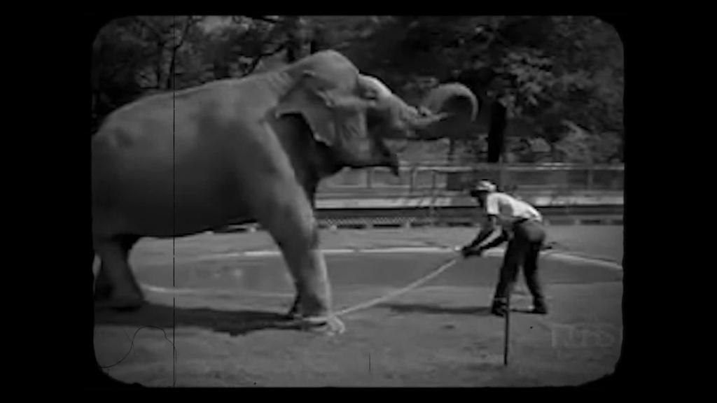 1936ko uztailaren hasieran iritsi zen Lodosara Anastasinitarren zirkua