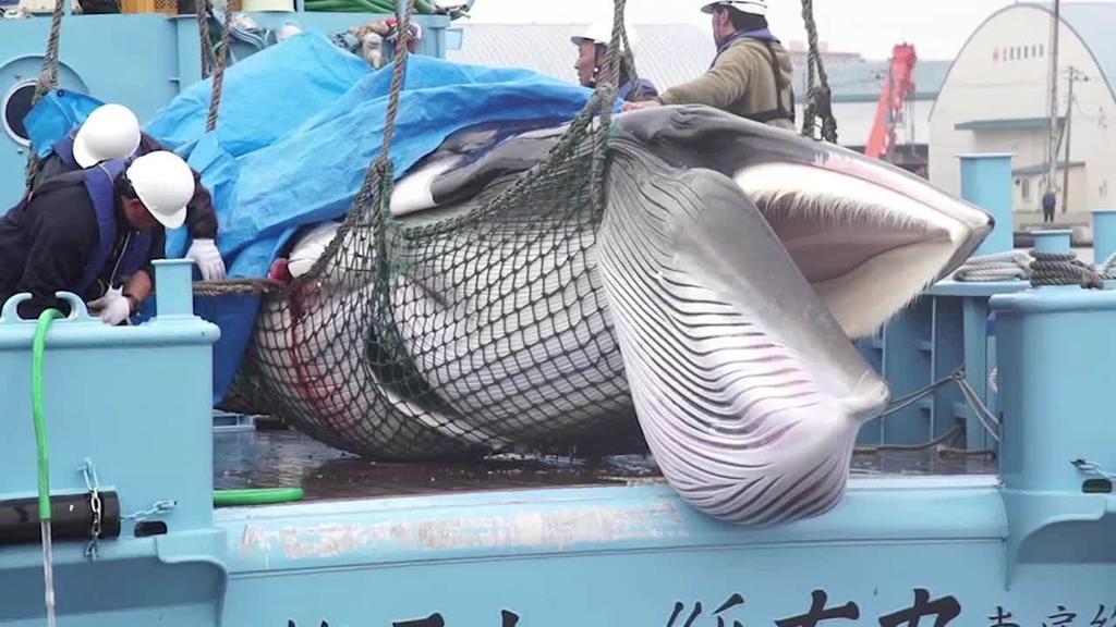 Japoniak bale ehiza legeztatu du 31 urteren ostean