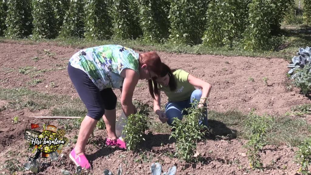 Hiri Baratzea: Brokolia, Ibarrako piperrak, baratzeko trikimailuak eta egun bateko liliarekin egindako entsalada